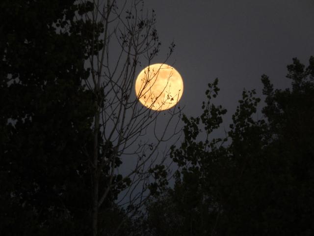 Nocturnal Musings #9: Back toBefore?